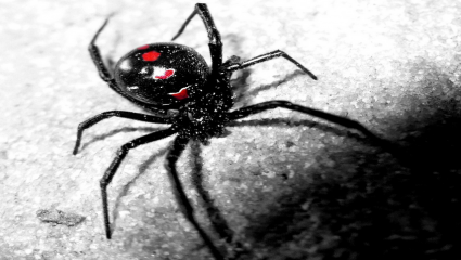 black widow vulnhub hackmyvm writeup walkthrough security